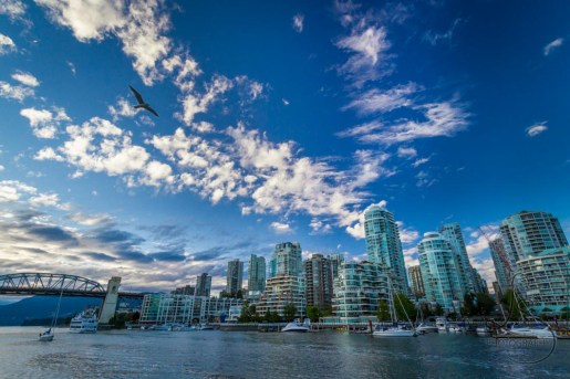 Seagull over Vancouver