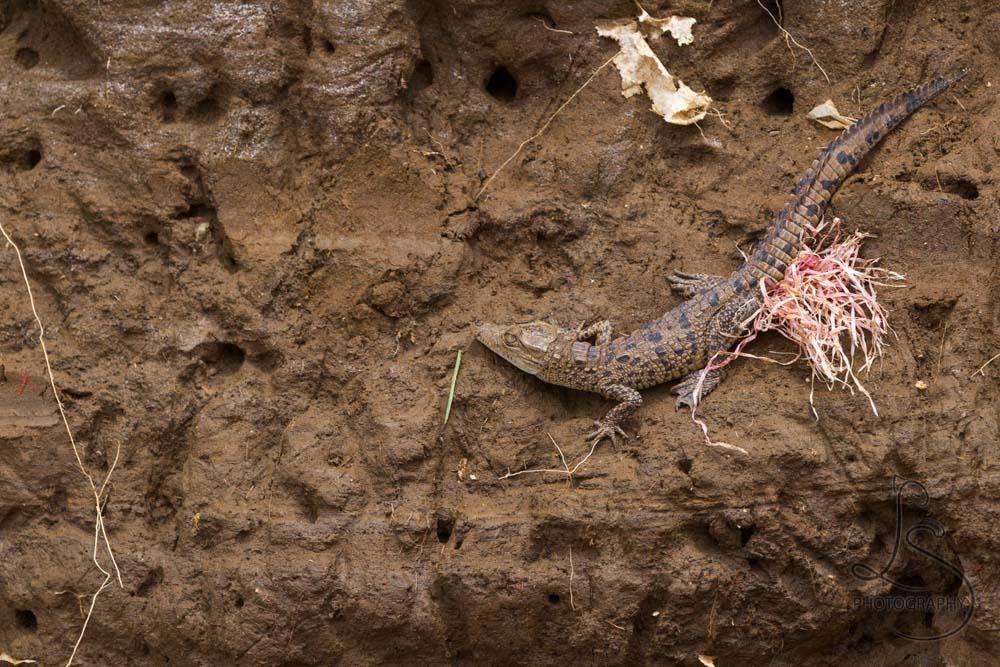 Costa Rica Flora y Fauna