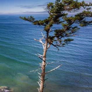 © LotsaSmiles Photography 2017