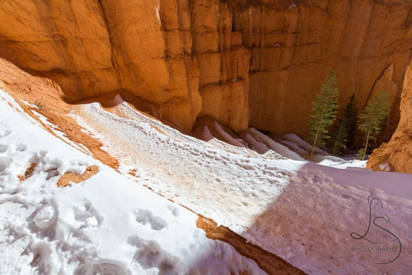 The snowy steps of switchbacks along a Bryce Canyon hike | LotsaSmiles Photography