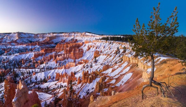 A tree gripping onto the rock by only its roots at the edge of a snowy Bryce Canyon at sunrise | LotsaSmiles Photography