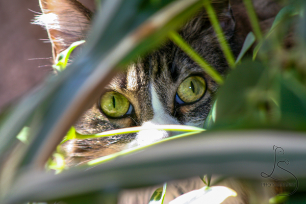 Zoe peering through a green houseplant, with only her eyes and a single ear visible | LotsaSmiles Photography