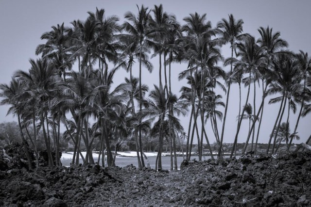 Palm trees lining a Hawaiian beach | LotsaSmiles Photography