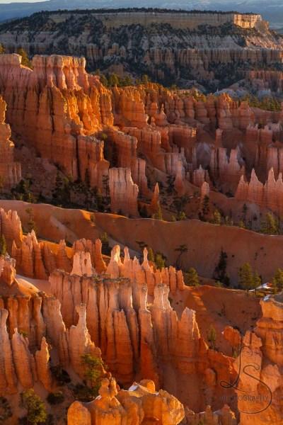Fire-orange hoodoos in Bryce Canyon at sunrise | LotsaSmiles Photography