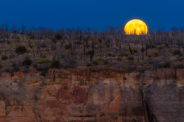 Full moon rising over the Mesa Verde canyon at dusk | LotsaSmiles Photography