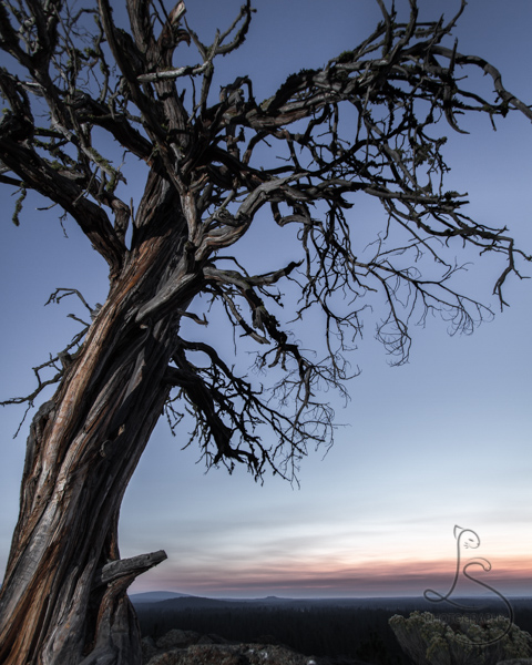 Dead tree at sunrise | LotsaSmiles Photography