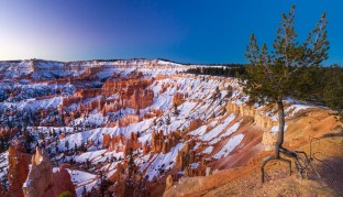 This tree holds on by just its roots at the edge of a snowy Bryce Canyon