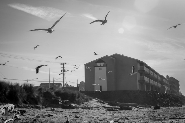 Seagulls taking flight from an Oregon beach with a hotel featuring a lighthouse mural in the background, in monochrome | LotsaSmiles Photography