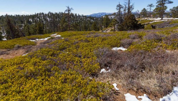 The grassy hill above Bryce Canyon | LotsaSmiles Photography