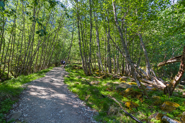 Gravel trail through sunny trees | LotsaSmiles Photography