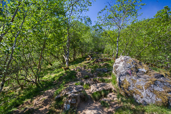 Rocky trail through sparse trees in Norway | LotsaSmiles Photography