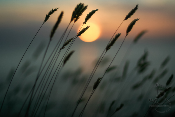 Setting sun behind the silhouette of reeds | LotsaSmiles Photography