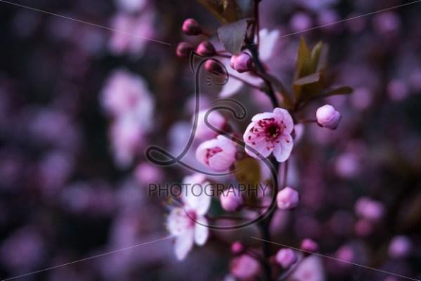 Bud to Bloom - LotsaSmiles Photography
