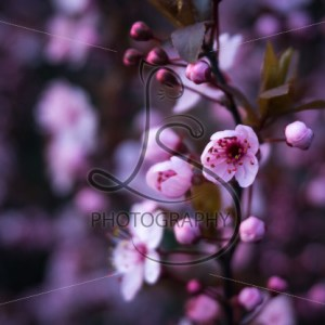 Bud to Bloom - LotsaSmiles Photography