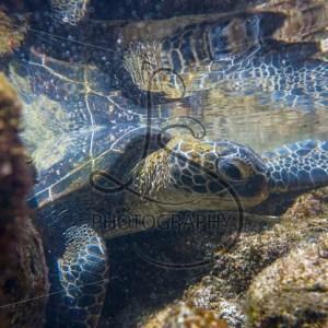 Turtle Lagoon - LotsaSmiles Photography