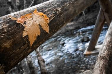 A single leaf clings to a railing along a hiking path in Oregon.