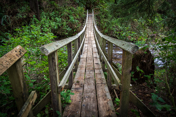 A wooden bridge crossing a river and leading into the thick Pacific Northwest ferns | LotsaSmiles Photography