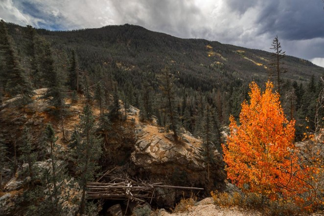 A lone tree greets autumn early in Rocky Mountain National Park.