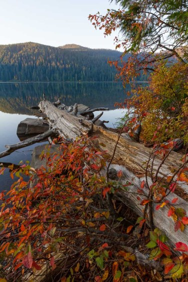 A log reaching out over Lost Lake, adorned with autumn leaves | LotsaSmiles Photography