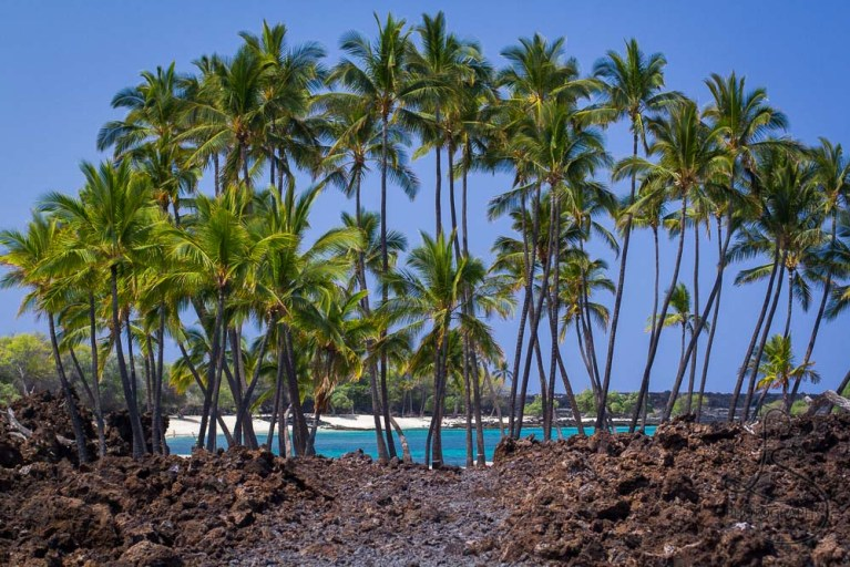 Palm trees lining a small Hawaiian cove | LotsaSmiles Photography