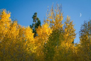 The crescent moon peeking between autumn color branches | LotsaSmiles Photography