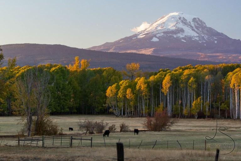 Mount Adams dominating over a local farm at dusk | LotsaSmiles Photography