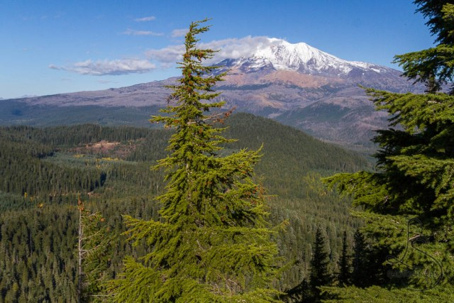 The view of Mount Adams   LotsaSmiles Photography