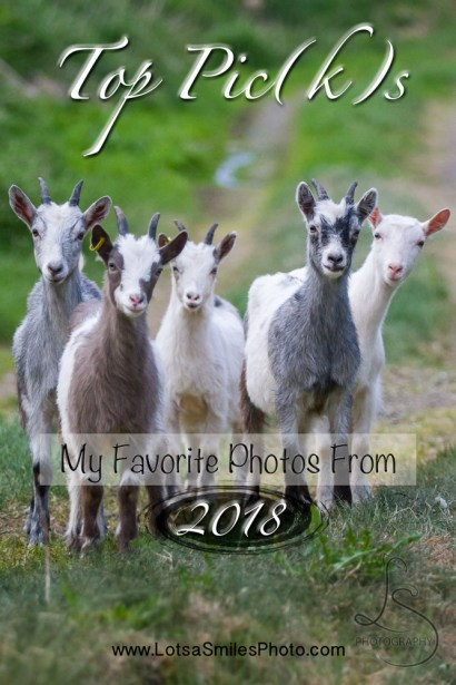 Top Pic(k)s: My Favorite Photos from 2018 | LotsaSmiles Photography | I took almost 20k photos last year, but I've somehow managed to select a few dozen as my favorites from the year. See what made the cut here! | #photography #photoblog #favorites #travellandscapephotographer