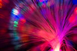 Fiber optics glow in an electronic garden at the Portland Winter Light Festival