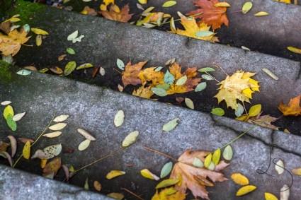 Autumn leaves sprinkle these steps in Seattle's Volunteer Park