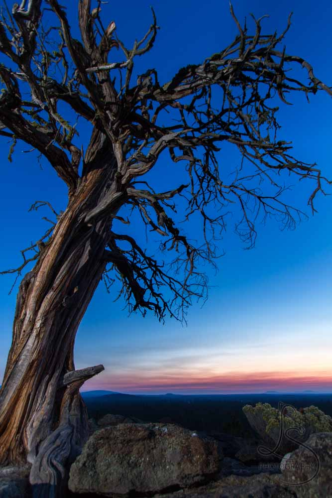 Dawn breaks on a characteristic dead tree atop a rocky lookout in Central Oregon.
