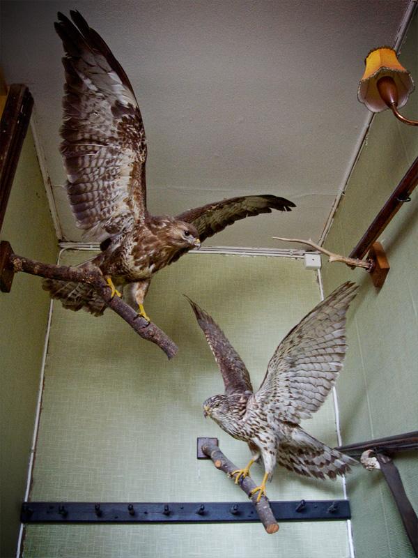 Stairway Birds by Sue Lott