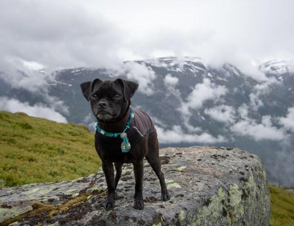 Nala auf dem Rossnos in Norwegen