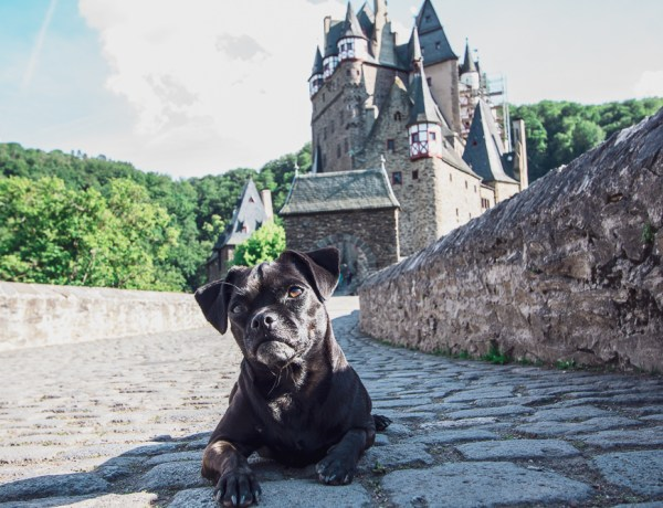 Nala vor Burg Eltz