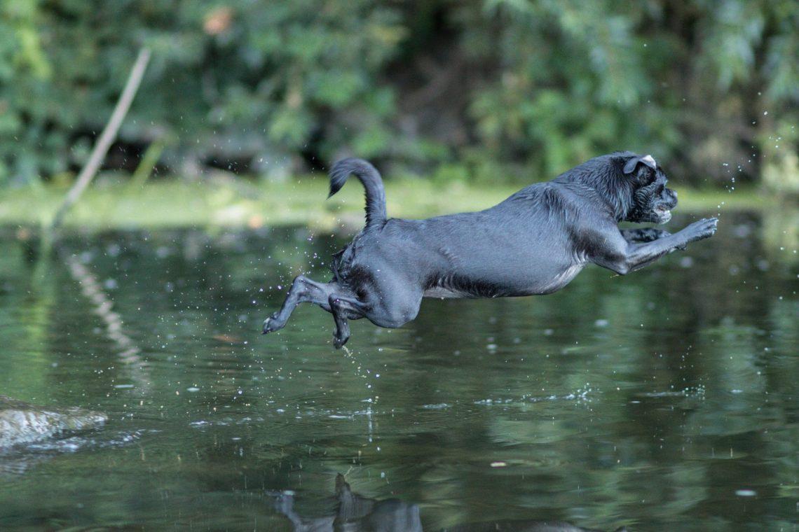 Nala springt ins Wasser