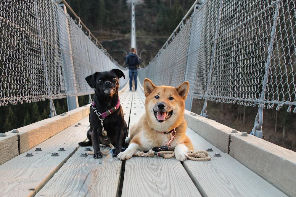 Nala Lotte Geierlay Hängeseilbrücke