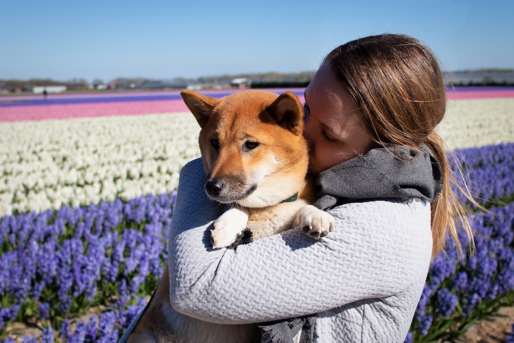 Holland Blumen Lotte