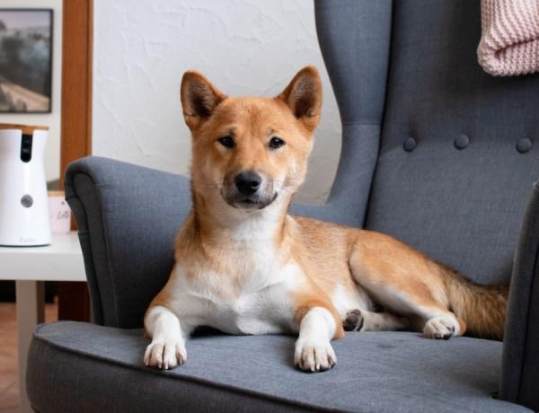 Lotte Furbo Hundekamera