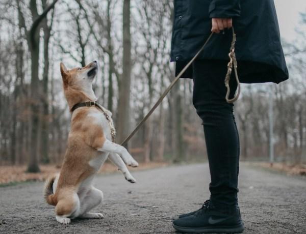 Lotte mit Hund in Bochum