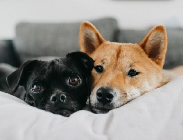 Hunde zuhause beschäftigen