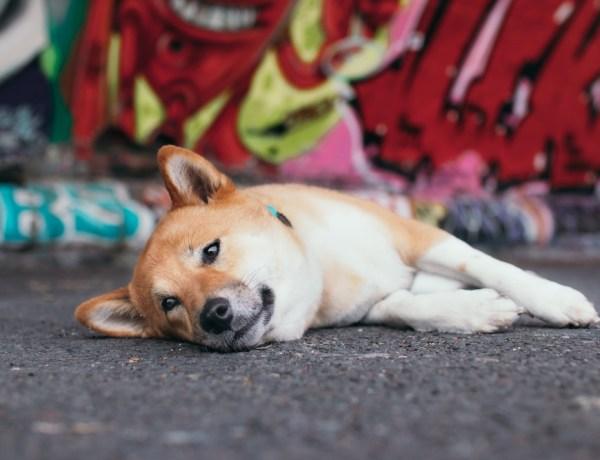 Hundetrick Peng Lotte