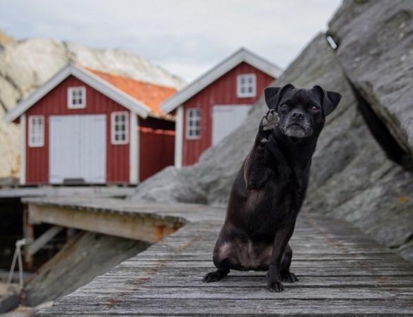 Schwedens Westküste Lyr