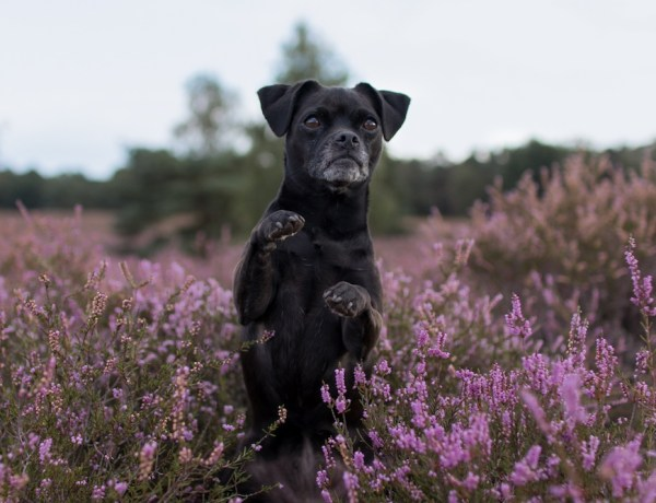 Männchen Hundetrick