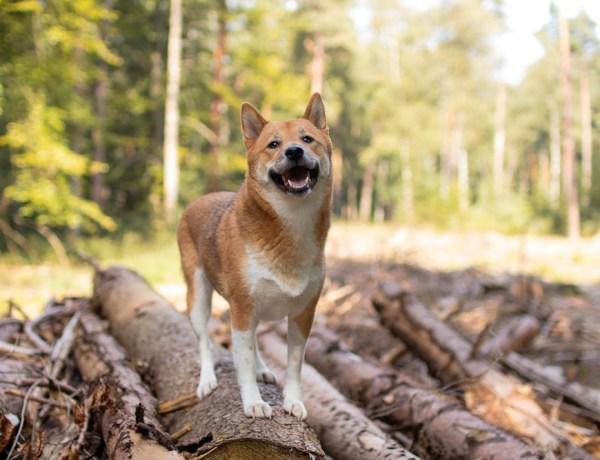Rundwanderweg Romantisches Furlbachtal mit Hund