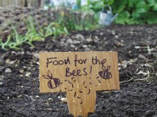 Food for the bees