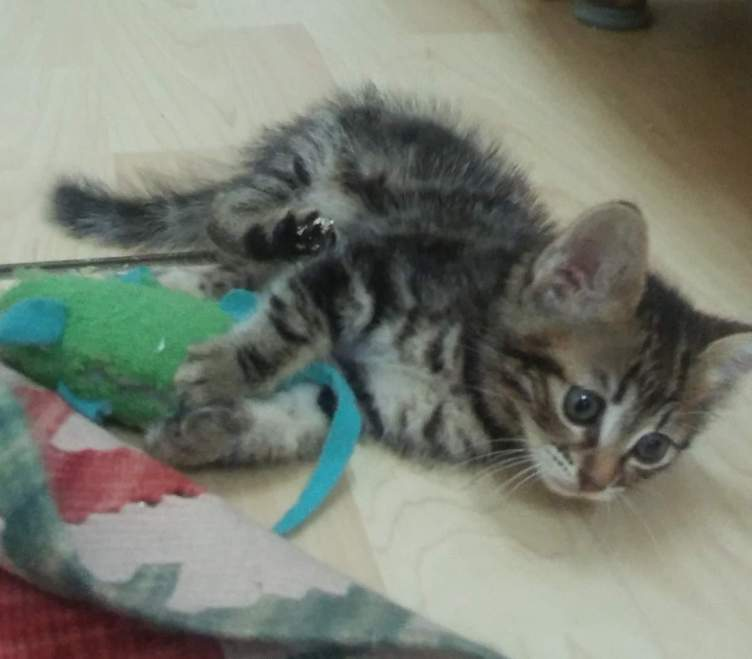 Sky the kitten playing