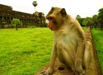 Monkey at Temple