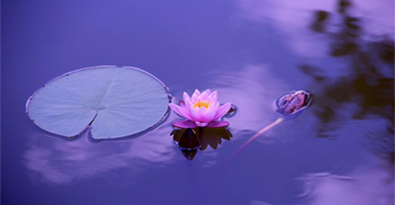 incorporating the lotus flower