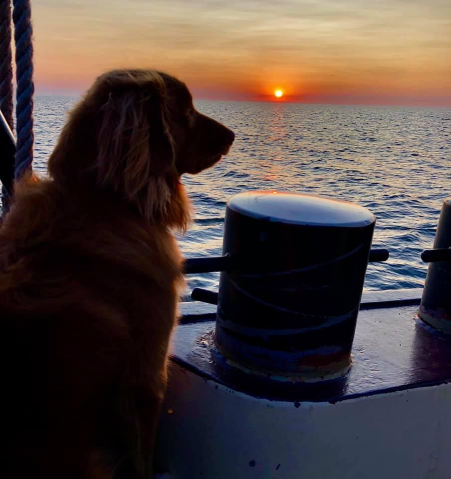 hond aan boord van antiek zeilschip tijdens ondergaande zon op de waddenzee