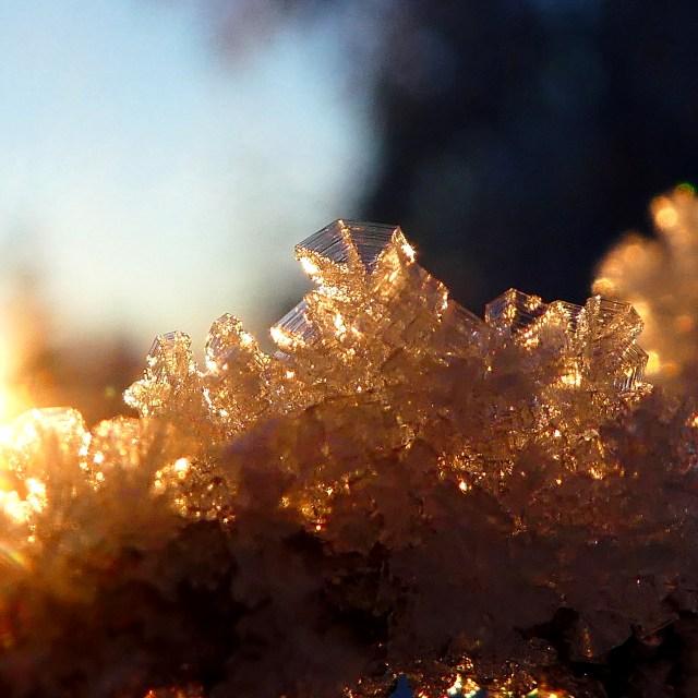 Sun, Birds, & Ice